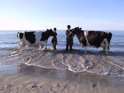 cow pose